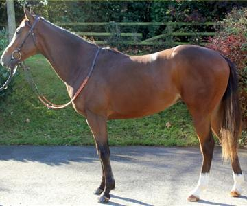 2016 Acclamation Colt , owned by