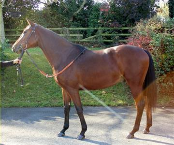 Bacon's Rebellion (GB), owned by Mr J. P. Carrington