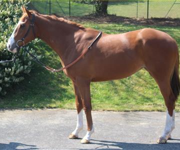 Inspiring Love (GB), owned by The LAM Partnership