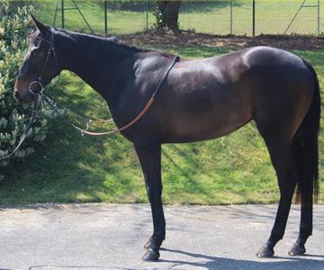 Kalamity Kitty (GB), owned by Fair Wind Partnership & Partner