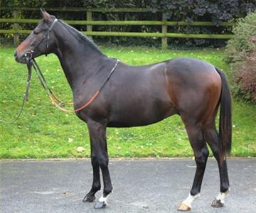Akavit (IRE), owned by Mr Simon Treacher